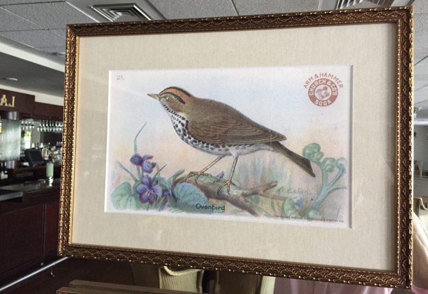 bird illustration in Larks Restaurant