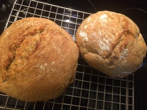 Whole Wheat Sourdough Loaves