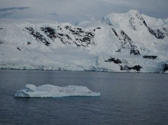 Penguins appear small when on larger floating ice