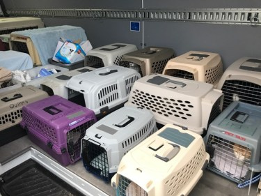 Animals in crates being transported to AHS