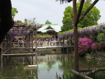 Wisteria Festival in Kameido Tenjin Shrine