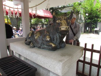 Sacred Cow in Kameido Shrine