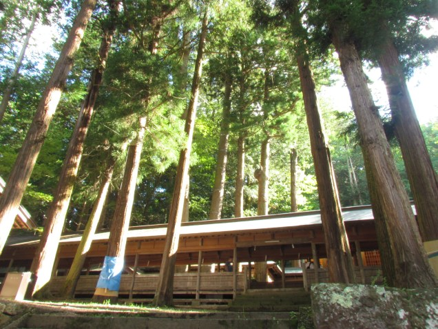 Cedars in Hon-Miya of Suwa Taisha