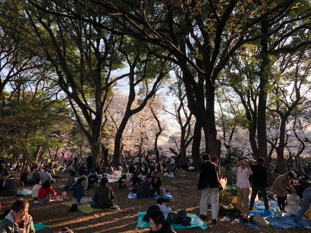 People enjoy picnic under the cherry blossoms in Ueno Park