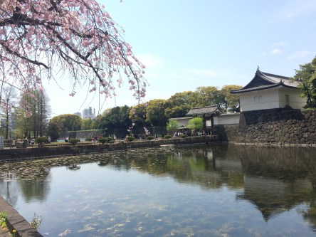 Cherry Blossoms and Imperial Palace