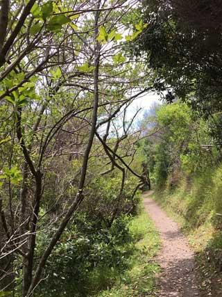 forest-bird-reserve_320