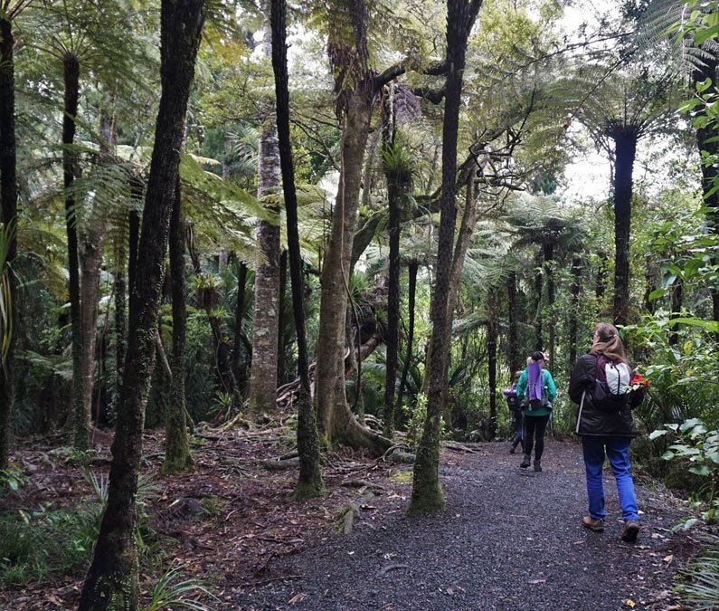Training as a Nature and Forest Therapy Guide
