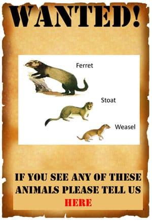 Predator Free Waiheke poster
