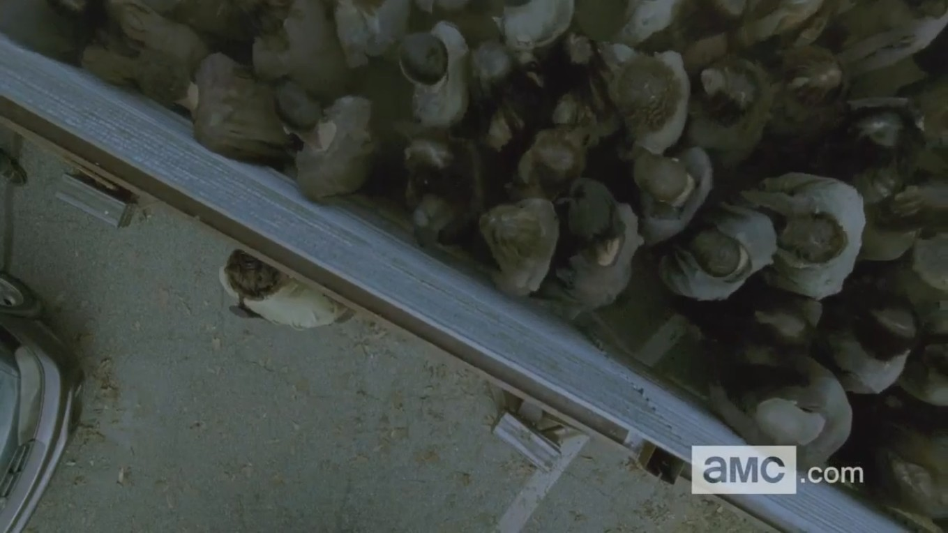 the-walking-dead-6-temporada-trailer-analise-008