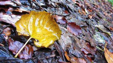 Autumn On The Leafy Loop Durrow
