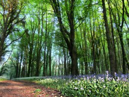 Knockatrina Wood, Durrow, Co. Laois
