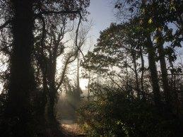 The sun emerges through the fog - Dunmore Wood, Durrow.