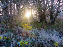Sun and frost @ Dunmore Wood Durrow.