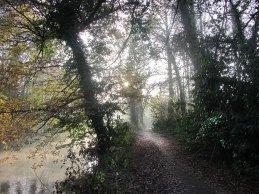Dunmore Wood, Durrow, November 30th, 2016.