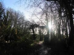 Dunmore Wood, Durrow - January 13th 2017.