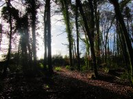 Dunmore Wood, Durrow - January 13th 2017.