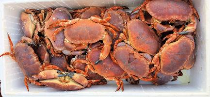 mersea_crabs