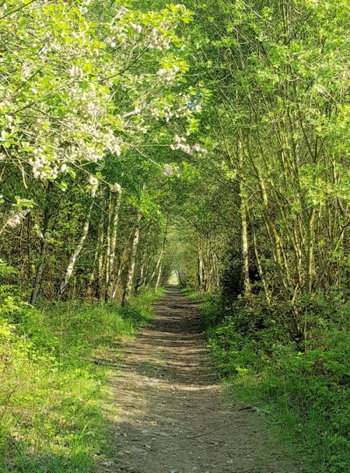 Canvey Wick Path