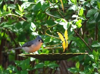 Tufted titmouse2