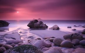 purple pink water