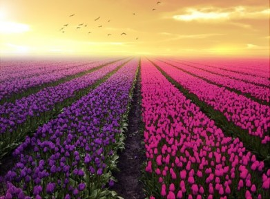 purple_pink_flower_beds-fb