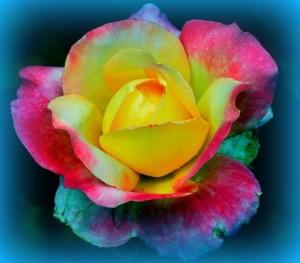 Divine Love Power Rose decree