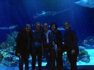 Family trip to the Shedd Aquarium