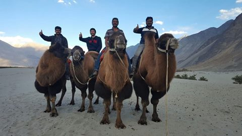 nnubra camel ride in leh ladakh
