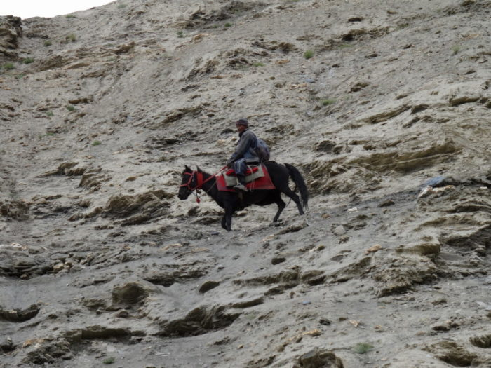 horse riding in leh