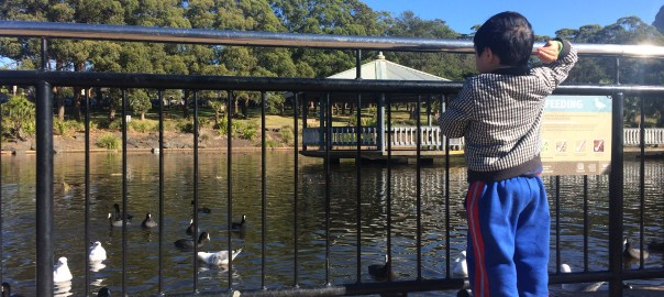Duck feeding is allowed at Wollongong Botanical Gardens when this photo was taken.