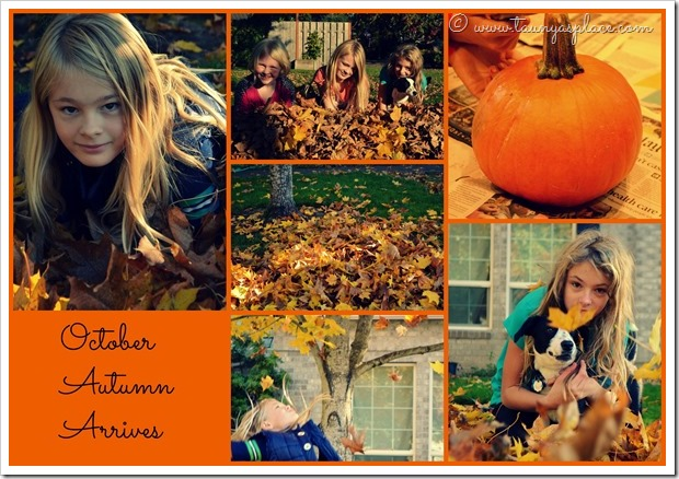 2013 Year in Review:  October 2013 - Autumn Arrives