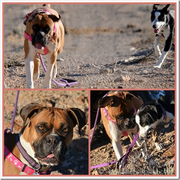 Shooting in the Desert - Puppies!
