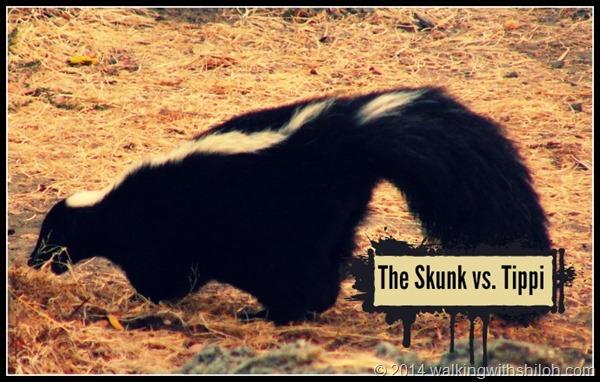 Skunk Vs. Tippi