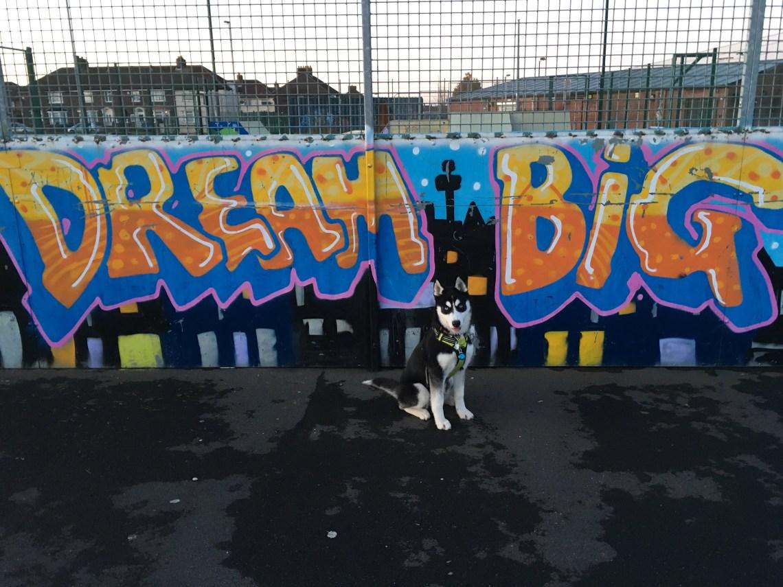 Dream Big Husky