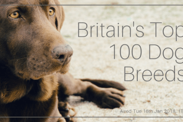 britains-top-100-dog-breeds