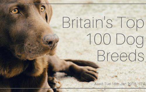 britains-top-100-dog-breeds