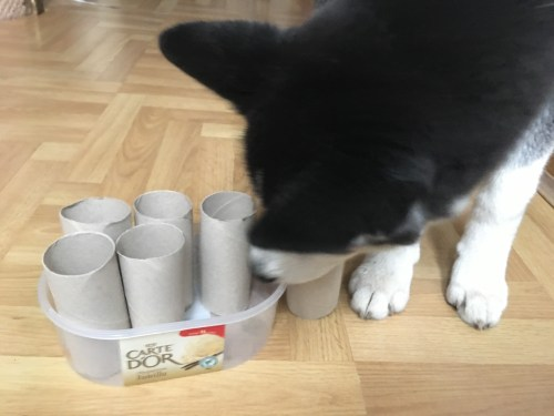 DIY dog games