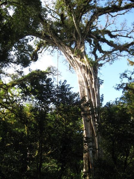 bullpen-tree