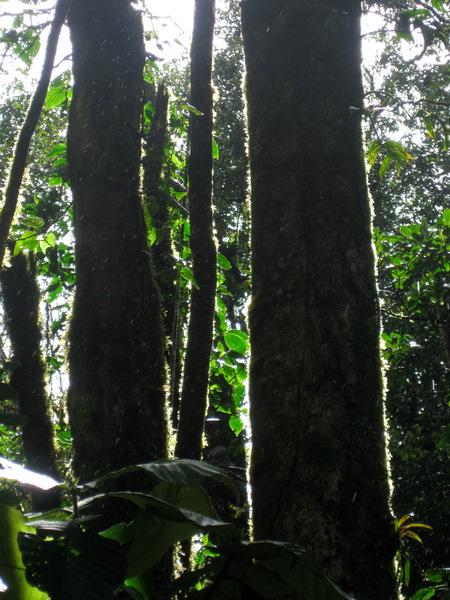 tree-shapes