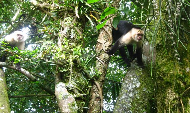 2 monkeys