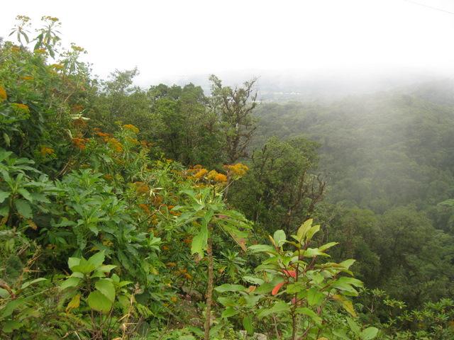 over Monteverde