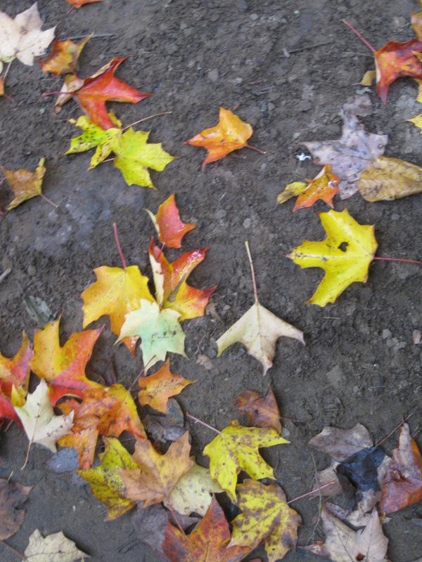 multi-leafed