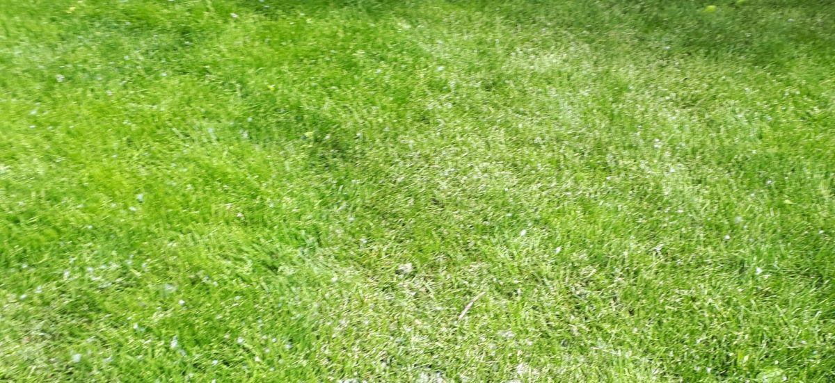 A photo of lawn grass in a park