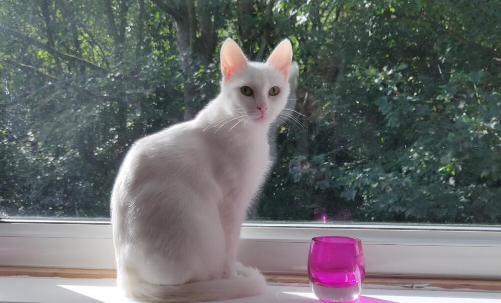 White cat on window cill