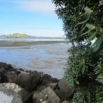 View of Mangere Mountain from Onehunga Foreshore