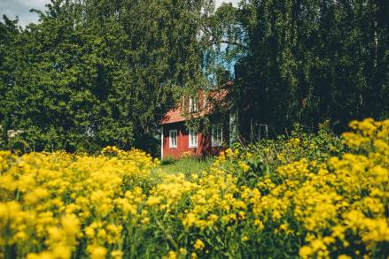Stockholm Archipelago Red Farmhouse Yellow Field