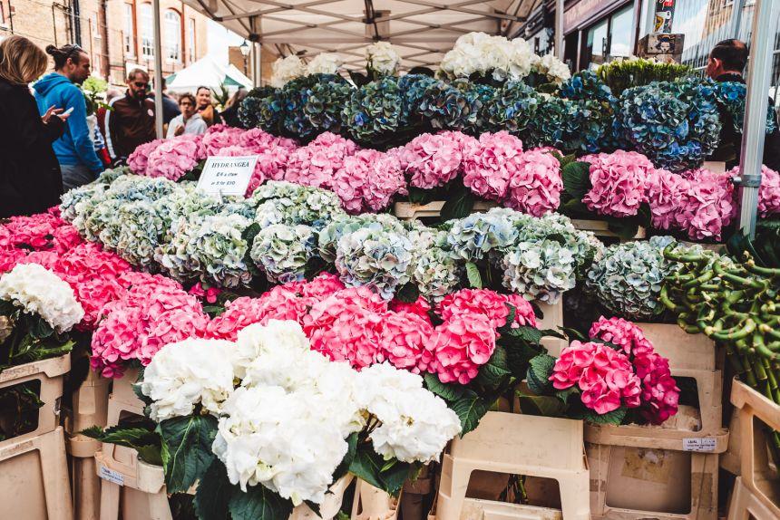 Columbia Road Flower Market London Hydrangeas
