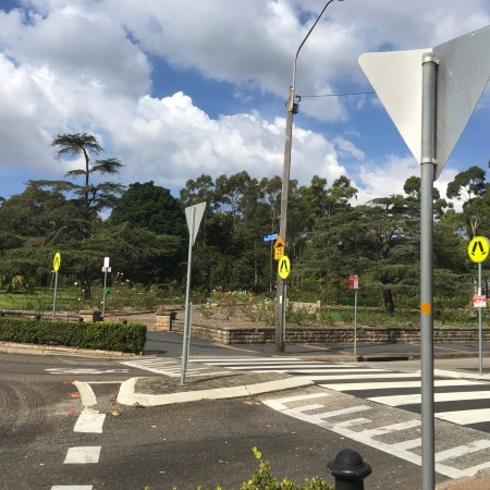 Wombat crossing at roundabout in Balmain