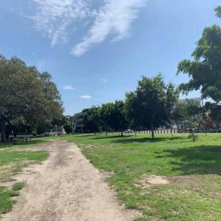 Desire Line, Moore Park