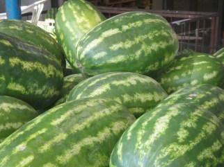 Desert Fruit Comparison: Huge Watermelons